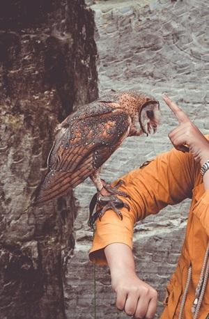 fobia degli uccelli